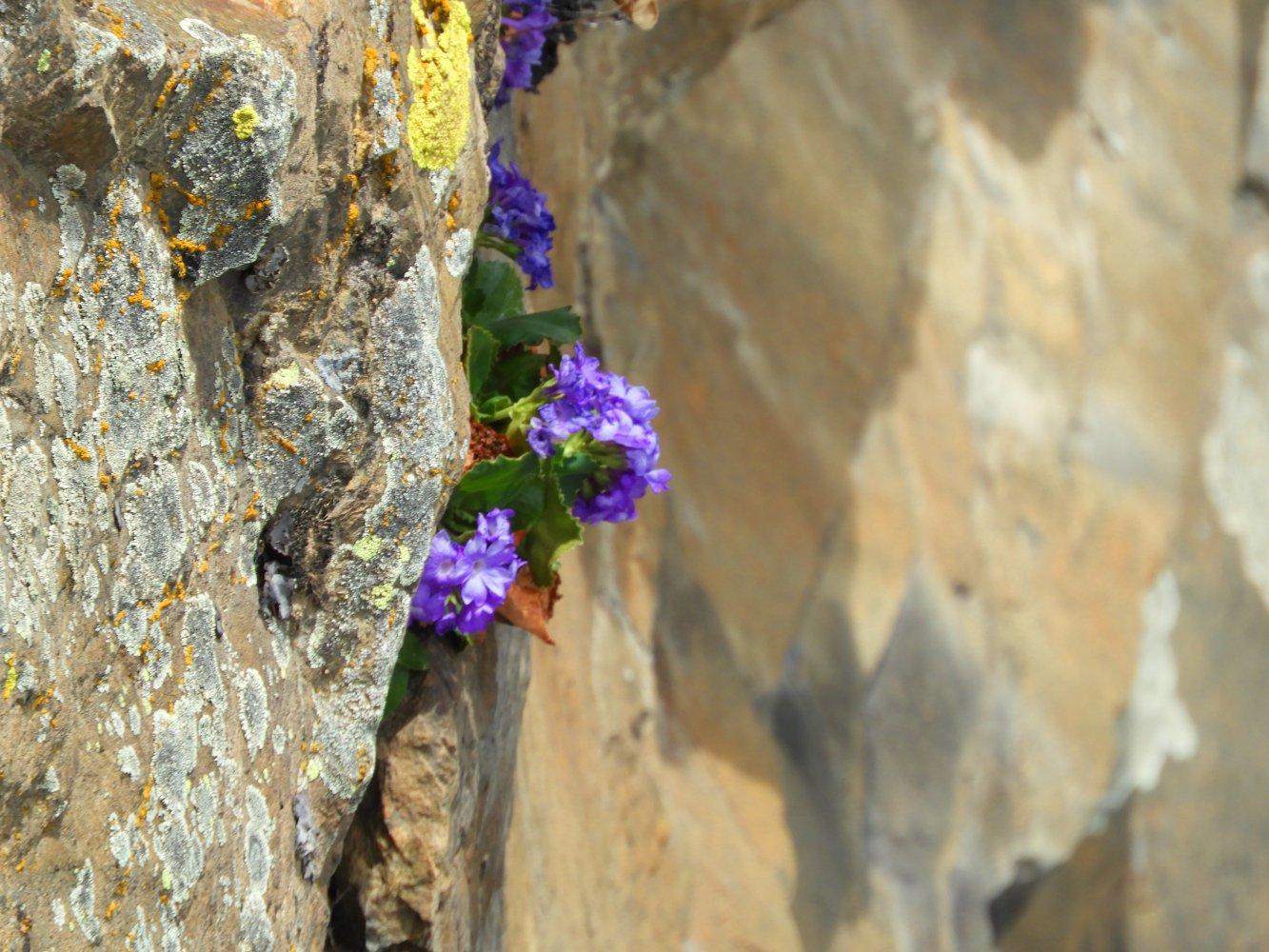 Frühling und Natur erleben im Kaunertal!